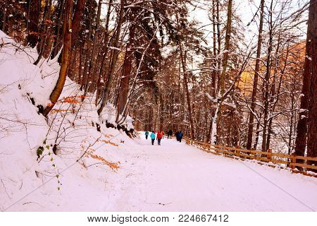 Road To The Winter And Touristic Station Poiana Brasov, 12 Km From Brasov, A Town Situated In Transy