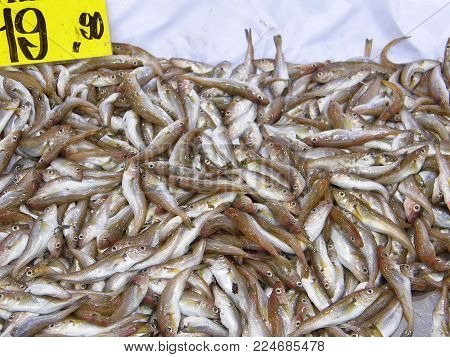 Fishing Shop And All Kinds Of Sea Fish, Seafood Sold In The Ice, Fishing Shop And All Kinds Of Sea F