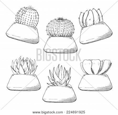 Sketch Of Succulents In Pots. Vector Illustration Of A Sketch Style.