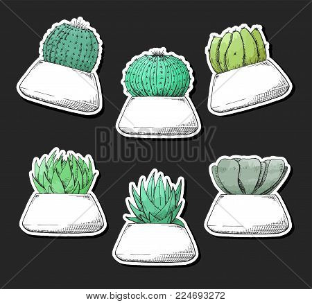 Sticker pack of succulents in pots. Stylized watercolor. Vector illustration.