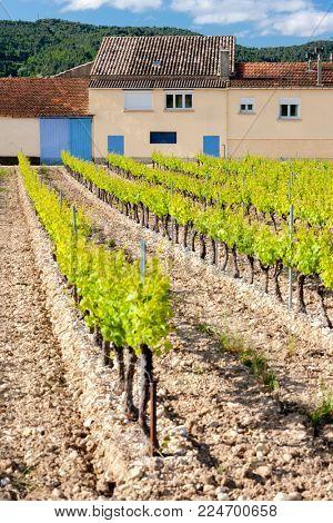 vineyards near Vinsobres, Provence, France