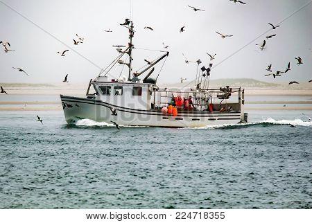 Seagulls surrounding lobster fishing boat approaching coast.