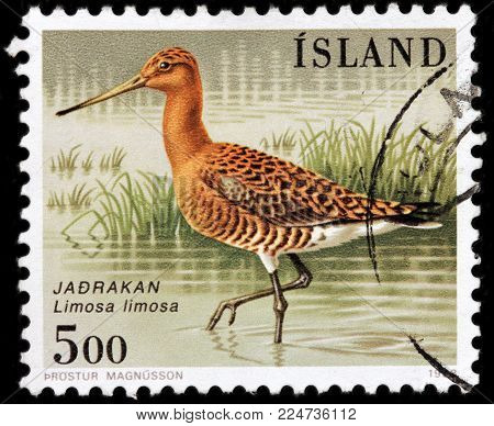 LUGA, RUSSIA - JANUARY 16, 2018: A stamp printed by ICELAND shows the black-tailed godwit - a large, long-legged, long-billed shorebird, circa 1988