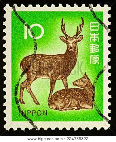 Moscow, Russia - February 02, 2018: A stamp printed in Japan shows Sika deer or Japanese deer (Cervus nippon), series