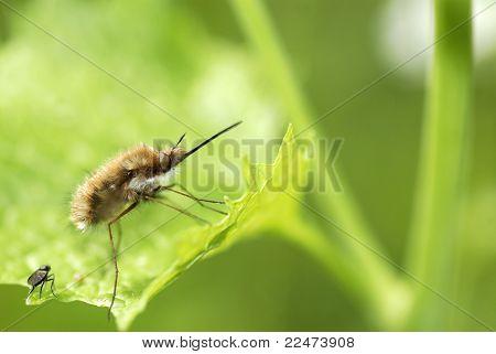 Macro of large bee on leaf