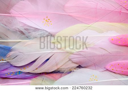 Multi Colored And Colorful Tropical Feather Background. Pink