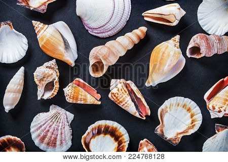 different sea shells on a black background