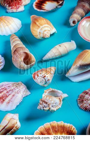 different sea shells on a blue background