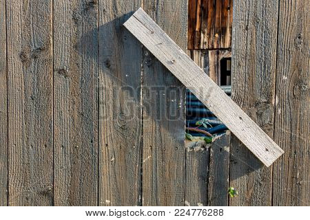 sapling and old wooden fence