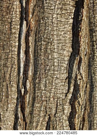 Details of a tree bark texture, some times park hide beautifull pictures.