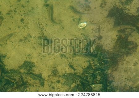 fish under water, underwater world, fishes and shells under water