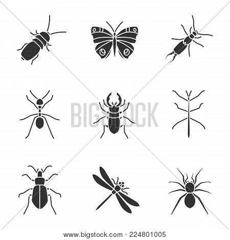 Insects glyph icons set. Darkling beetle, butterfly, earwig, stag and ground bugs, phasmid, ant, dragonfly, spider. Silhouette symbols. Vector isolated illustration