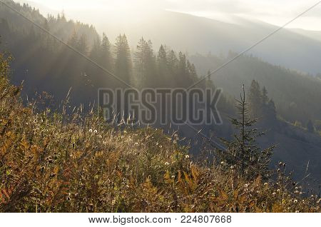 Morning landscape in the mountains of the Carpathians. A lot of light, trees and mountains. Grass and haze, rays of light