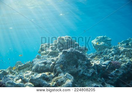 Sea, coral and fish. coral under water. The sun's rays shine on the coral