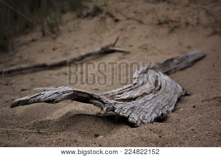 A piece of driftwood stranded on the beach.