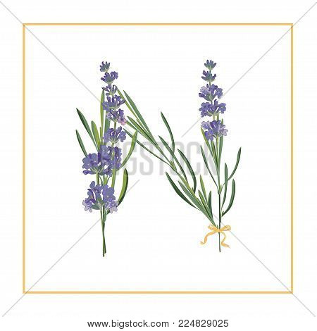Letter N monogram. Retro sign alphabet with lavender flower initial. Watercolor style, botanical illustration isolated on white. Vintage vector font typeface