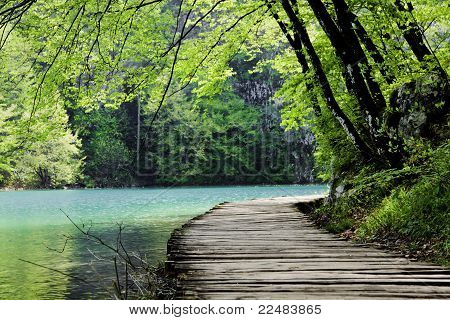 Wooden Path Near A Forest Lake
