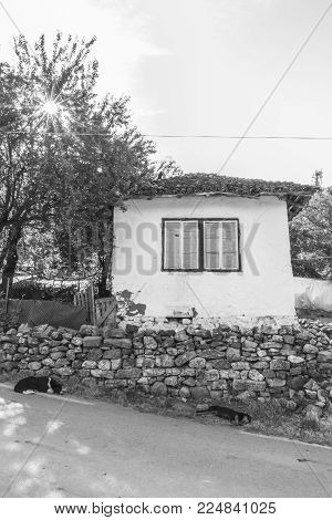 Two stray dogs lie on the street in front of the stone wall of a mean house in the small town of Tran, Bulgaria, black and white photography