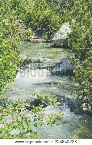 Brook in High Tatras on a Summer Day