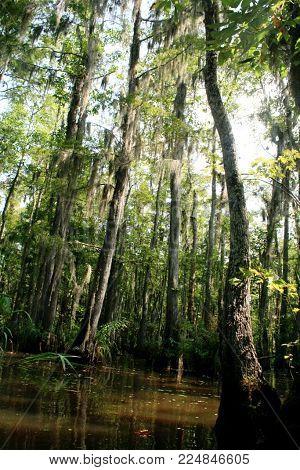 Creepy angled shot of Louisiana bayou with shadows
