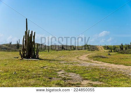 The Arid Nature Of Aruba. Caribbean Landscape.