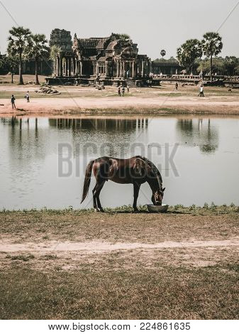 Palm trees and horse at the Angkor watt temple, Cambodia, Siem reap