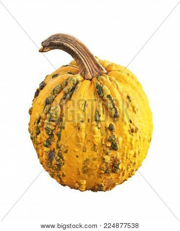 Autumn pumpkin isolated on white background. Orange gourd with pimples and bumps.