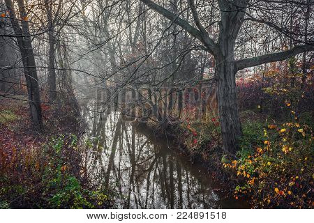 A late Autumn woodlands scene with dead branches and reflections on a stream.