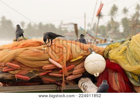 Black Crows (ravens) Sit On Orange Fishing Nets