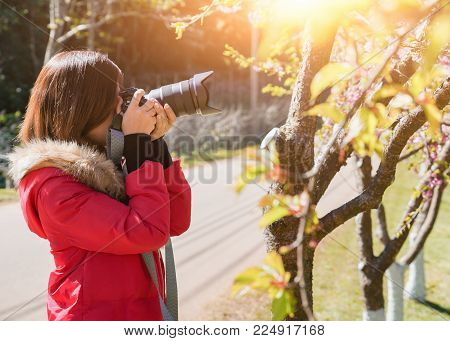 Happy Woman Traveler Take Photos By Camera With Cherry Blossoms Tree On Vacation While Spring, Selec