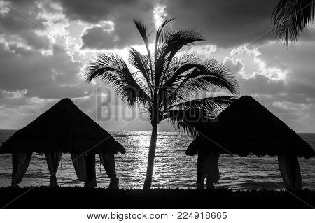 Black and white sunrise, with palapas and a lone palm tree in the foreground.
