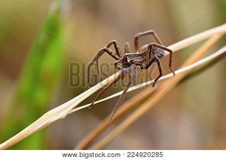 Beautiful macro shot of spider in grass.