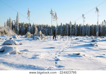 People leaving in the winter forest.  Traces of foot Prints in the snow of the last person.