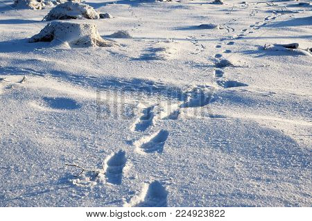 Leaving human footprints on the blue snow. Traces of the footprints of the last person in the winter. Backpacker in winter.