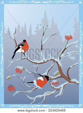 Winter postcard - bullfinches on a snow-covered  rowan on the background of a winter forest