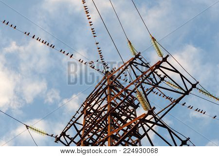 A large group of birds sitting on the power line wires.