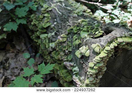 mossy green log tree leaves mushrooms nature fallen dense forest woods