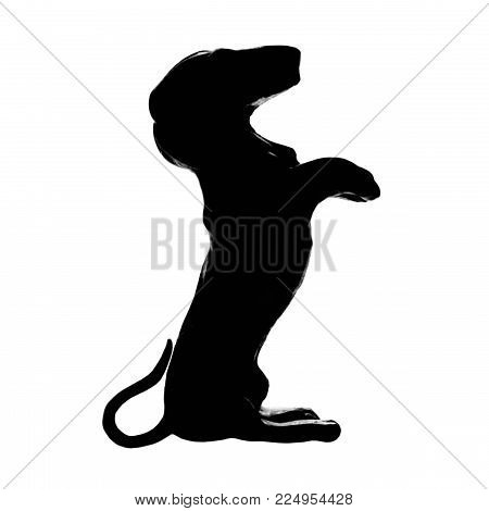 Dachshund badger dog breed, isolated pedigree silhouette, vertical illustration, large detailed black macro closeup, kennel club concept cutout