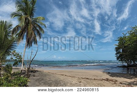 Panorama view of a beach with palm trees south of Puerto Viejo de Talamanca, Costa Rica