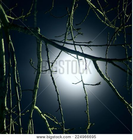 the branches of the trees in the moonlight