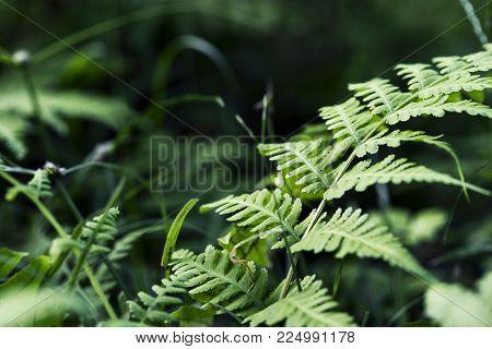 Fern leaf on green garden background. Green fern macrophoto. Fairy tale forest scene. Fern leaf closeup. Summer forest lawn. Blooming nature under sun. Forest fern meadow. Wild green foliage banner