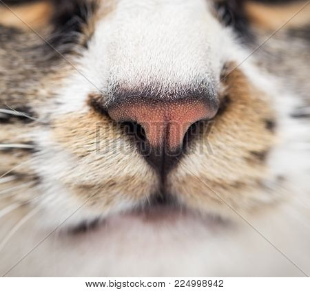 nose of a striped male cat . Photos in the studio