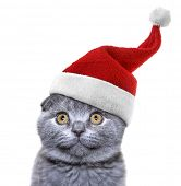 christmas cat in red Santa Claus cap on a white background poster