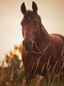horse at evening sky art toned outdoor poster