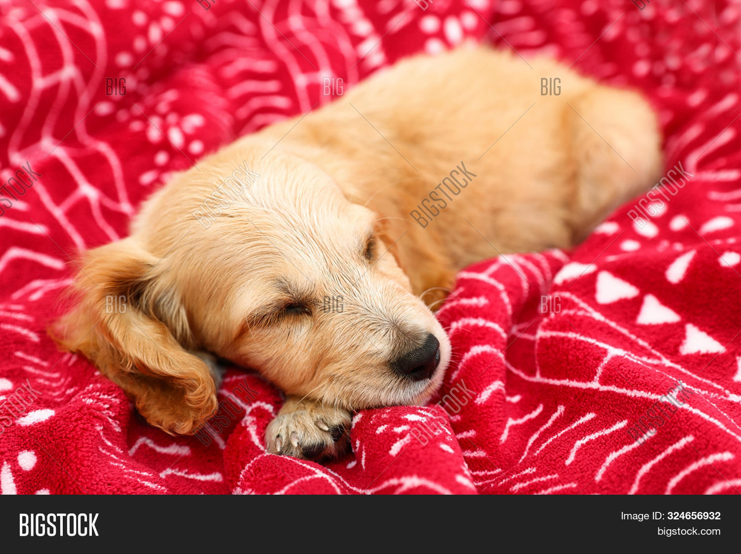 Adorable English Image Photo Free Trial Bigstock