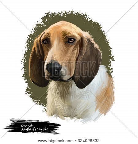 Grand Anglo-francais, Great Anglo-french Dog Digital Art Illustration Isolated On White Background.