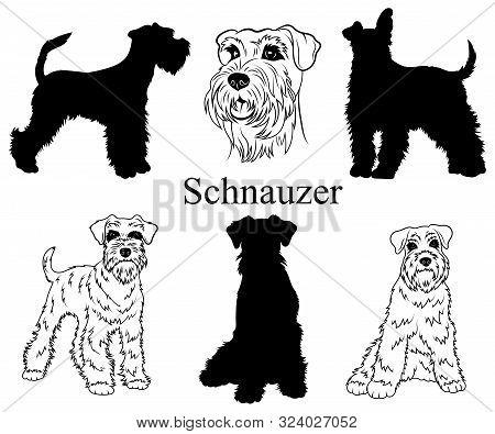 Schnauzer Set. Collection Of Pedigree Dogs. Black White Illustration Of A Schnauzer Dog. Vector Draw