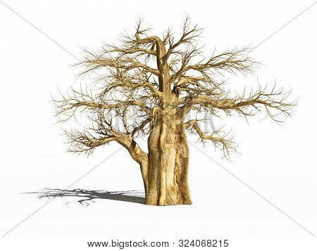 Baobab In The Dry Season. The Dry Baobab With Its Shadow Is On White Surface. Isolated. 3d Illustrat