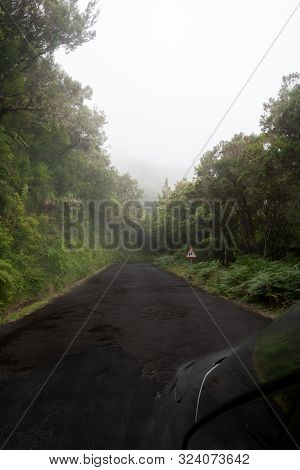 Foggy Road To Cross Encircled In The Forest In Madere