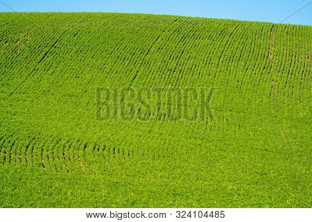 Plowed Field In The Palouse Of Washington State, With Lines From The Harvest In The Field